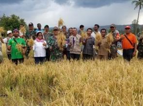 Jalin Silahturahmi, Satgas Pamtas RI-RDTL Yonif 132/BS, Bantu Masyarakat Perbatasan Panen Padi