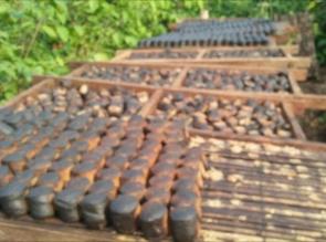 Gambir Desa Tabing Khususnya Koto Kampar Hulu Masuk Kepasar Lelang Komoditi Agro