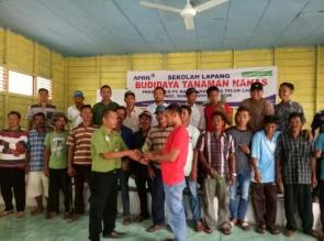 Ingin Jadi Sentra Nanas di Riau, 80 Ribu Bibit Ditanam di Siak