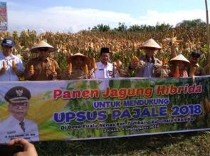 Bupati Panen Jagung Hibrida Proyek Percontohan di Tambang.