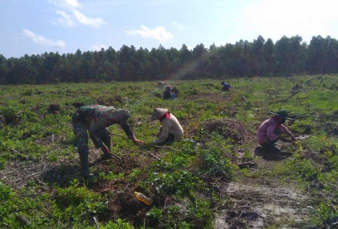 Kedekatan Babinsa Kodim 0313/Kampar di HUT TNI Mendampingi Petani Tingkatkan Kesejahteraan