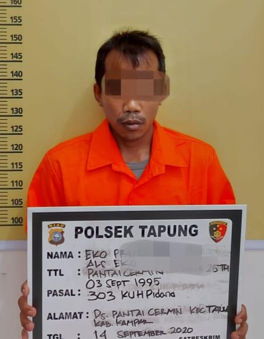 Polsek Tapung Tangkap Penjual Nomor Judi Togel Online di Desa Pantai Cermin