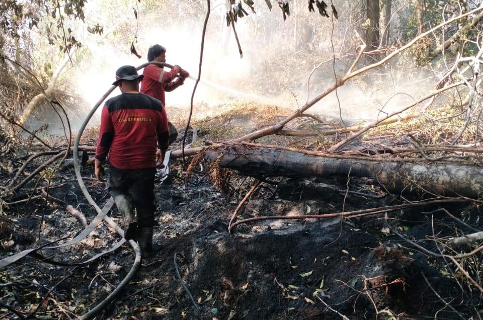 Bantu Padamkan Karhutla, PT RAPP Kerahkan Tim Fire Fighter di 5 Lokasi di Siak