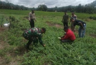 Babinsa Motivasi Petani Guna Menyukseskan Program Ketahanan Pangan